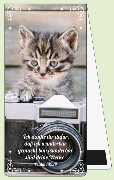MLZ Getigertes Kätzchen