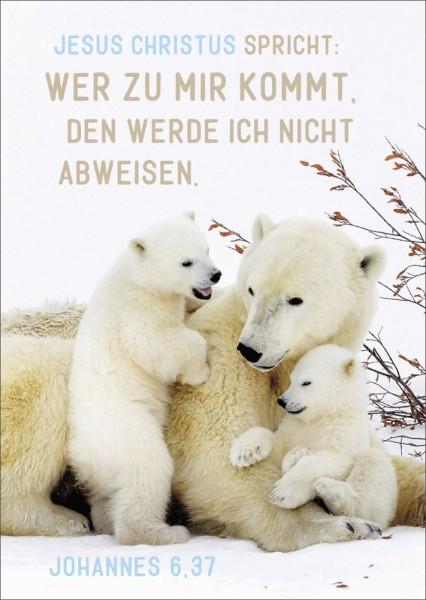Postkarte Eisbären