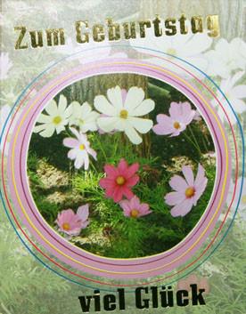 DK Mini Veilchen im Kreis