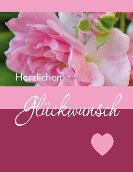 DK Mini Heckenrose